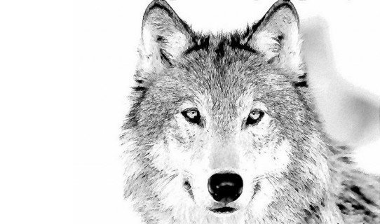 riccardo marchina - in bocca al lupo